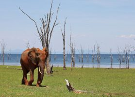 Parc national Matusadona: une découverte sans pareille