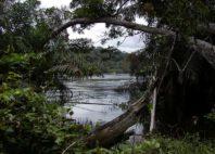 Parc national d'Ivindo
