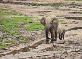 Parc national de Dzanga-Ndoki: un voyage au paradis