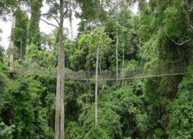 Parc national de Kakum: la forêt vue d'en haut