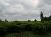 Parc national de Kibale