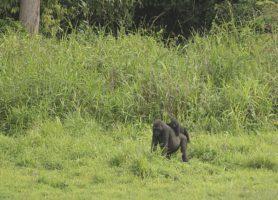 Parc national de Lobéké: une impressionnante merveille naturelle