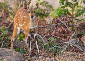 Parc national de Mole: le trésor sauvage ghanéen