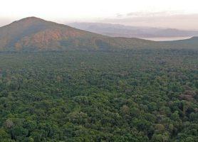 Parc national de Nech Sar: l'herbe blanche d'Éthiopie