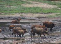 Parc national de Nouabalé-Ndoki