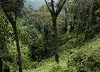 Parc national de Nyungwe