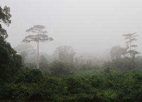 Parc national de Taï: une envoûtante biodiversité