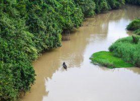 Parc national de la Comoé: le trésor du pays de l'ivoire