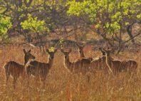 Parc national de la Kafue