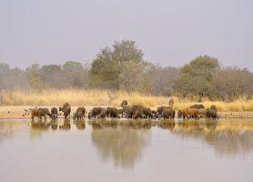Parc national de la Pendjari: quand nature rime avec beauté