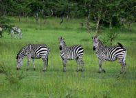 Parc national du lac Mburo