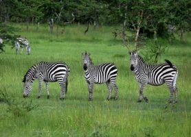 Parc national du lac Mburo: le parc aux multiples atouts