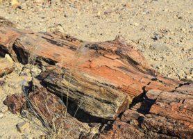 Forêt pétrifiée du Damaraland: retour à l'origine du monde