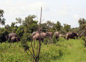Réserve de Nazinga: le trésor burkinabé