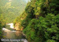 Réserve de Shennongjia