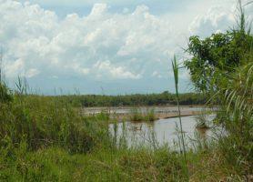 Rusizi National Park: au royaume des hippopotames
