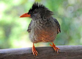 Vallée de Mai: explorez ce site naturel irrésistible