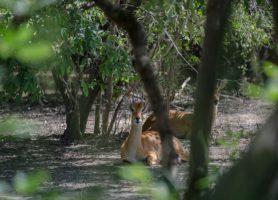 Parc national du W: au cœur d'un écosystème exubérant!