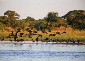 Bas-Zambèze: une exploration hors pair