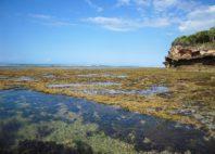 Île de Bongoyo