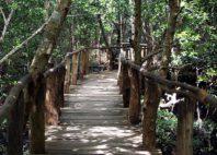 Jozani Chwaka Bay