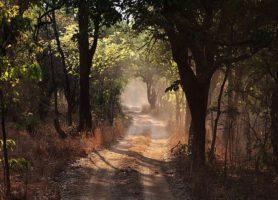 Parc national de Kasanka: une exploration inoubliable