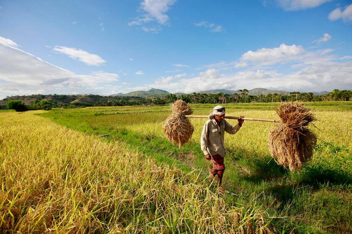 Timor oriental: découvrez le paradis côté malais
