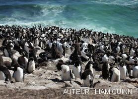 îles Falkland sites de rencontre personne site de rencontre en ligne