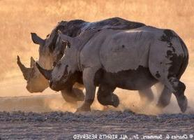 Khama Rhino Sanctuary : une escapade formidable