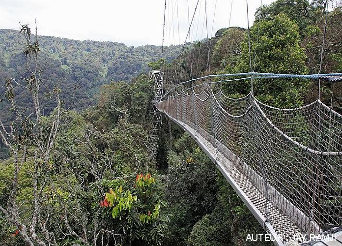 Parc national de Nyungwe