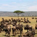 Le Masai Mara