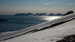 L'île de Spitzberg : le paradis des ours polaires