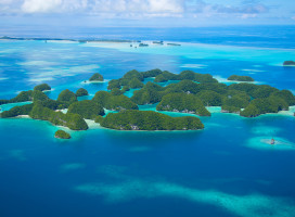 Les îles Palaos : le paradis des récifs coralliens et des animaux marins