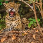 Parc du Pantanal