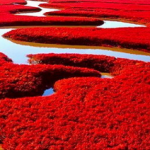 La plage rouge de Panjin
