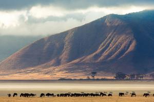 Cratère du Ngorongoro : une merveille géologique