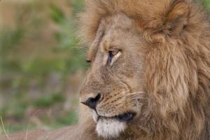 La « Game Reserve » de Moremi : la nature dans toute sa diversité