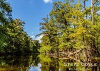 Bayous de Louisiane