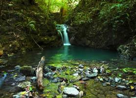 Parc national Corcovado : un complexe de biodiversités