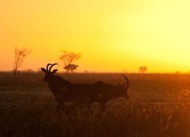 Parc national de Waza : une exubérante réserve de biosphère