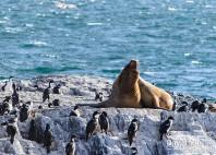 Parc national de Tierra del Fuego