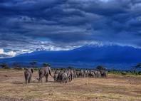 Parc national d'Amboseli