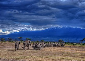 Parc national d'Amboseli : un petit bijou naturel à explorer