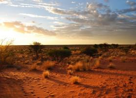 Désert du Kalahari: une immensité à découvrir