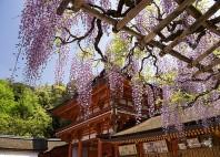 Kasuga-taisha