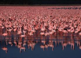 Parc National du lac Nakuru: l'exubérance de la biodiversité
