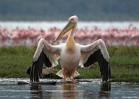 Parc National du lac Nakuru