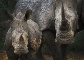 Parc national Kruger: une réserve animalière à découvrir