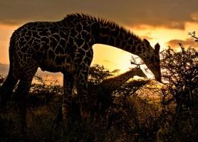 Parc national de Nairobi: un chef-d'œuvre naturel unique au monde