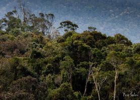 Parc national de Ranomafana: un joyau de l'océan Indien